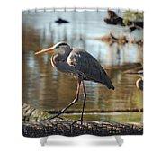 Homosassa Springs Waterfowl 8 Shower Curtain
