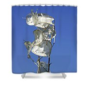 Honesty Seed Pods Shower Curtain