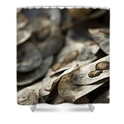 Honesty Seeds Shower Curtain