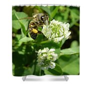 Honey And Clover Shower Curtain