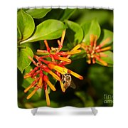 Honey Bee 6 Shower Curtain