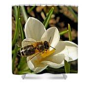 Honey Bee And Crocus Shower Curtain