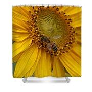 Honey Bee Close Up On Edge Of Sunfower...  # Shower Curtain
