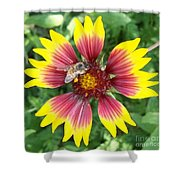 Honey Bee On A Indian Blanket Shower Curtain
