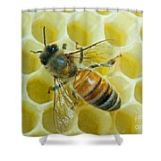 Honey Bee In Hive Shower Curtain