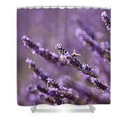 Honey Bee In Lavender Shower Curtain