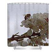 Honey Bee On Almond Blossom   #9636 Shower Curtain