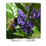 Honey Bee On Purple Flower Shower Curtain