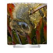 Honey Bee Profile Shower Curtain
