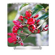 Honey Bee Working Shower Curtain