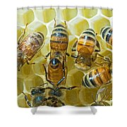 Honey Bees In Hive Shower Curtain