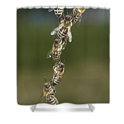 Honey Bees Join To Repair Honeycomb Shower Curtain