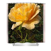 Honey Perfume 2 Shower Curtain