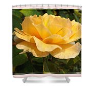 Honey Perfume Shower Curtain