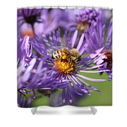 Honeybee And Aster Shower Curtain