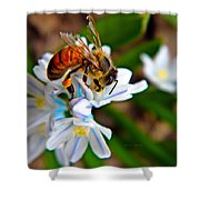 Honeybee And Squill Shower Curtain