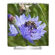 Honeybee In Bachelor's Button Shower Curtain