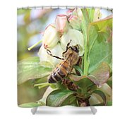 Honeybee In Blueberry Blossoms Shower Curtain