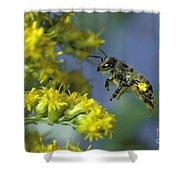 Honeybee In Flight Shower Curtain