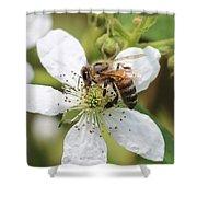Honeybee On A Blackberry Blossom Shower Curtain
