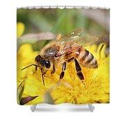 Honeybee On A Dandelion Shower Curtain
