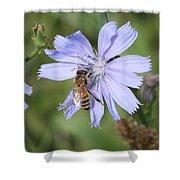 Honeybee On Chicory Shower Curtain
