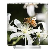 Honeybee On Clematis Shower Curtain
