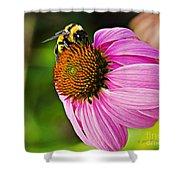 Honeybee On Echinacea Flower Shower Curtain