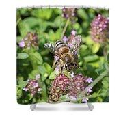 Honeybee On Heal All Shower Curtain