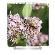 Honeybee On Oregano Shower Curtain