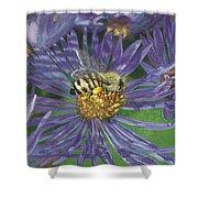Honeybee On Purple Aster Shower Curtain