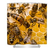 Honeybee Workers And Queen Shower Curtain