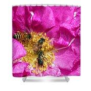 Honeybees On Pink Rose Shower Curtain