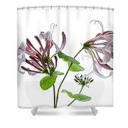Honeysuckle Blossom Shower Curtain