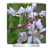 Honeysuckle Blossoms 2 Shower Curtain