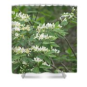 Honeysuckle Blossoms Shower Curtain