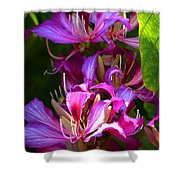 Hong Kong Orchid Shower Curtain