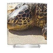 Honu - Hawaiian Sea Turtle Hookipa Beach Maui Hawaii Shower Curtain