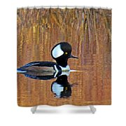 Hooded Merganser At Sunset Shower Curtain