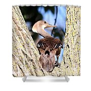 Hooded Merganser Duck Shower Curtain
