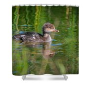 Hooded Merganser Duckling Shower Curtain