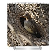 Hooded Merganser Getting Ready To Fly Shower Curtain