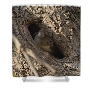 Hooded Merganser In The Knot Hole  Shower Curtain