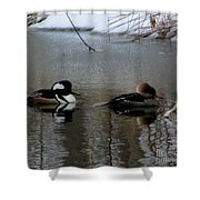 Hooded Merganser Mates Shower Curtain