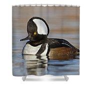 Hooded Merganser On Calm Pond Shower Curtain