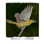 Hooded Oriole Hen At Take Shower Curtain