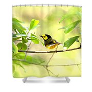Hooded Warbler - Img_9274-007 Shower Curtain