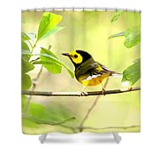 Hooded Warbler - Img_9274-009 Shower Curtain