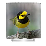 Hooded Warbler - Img_9371-001 Shower Curtain