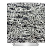 Hoof Prints In Sand Shower Curtain